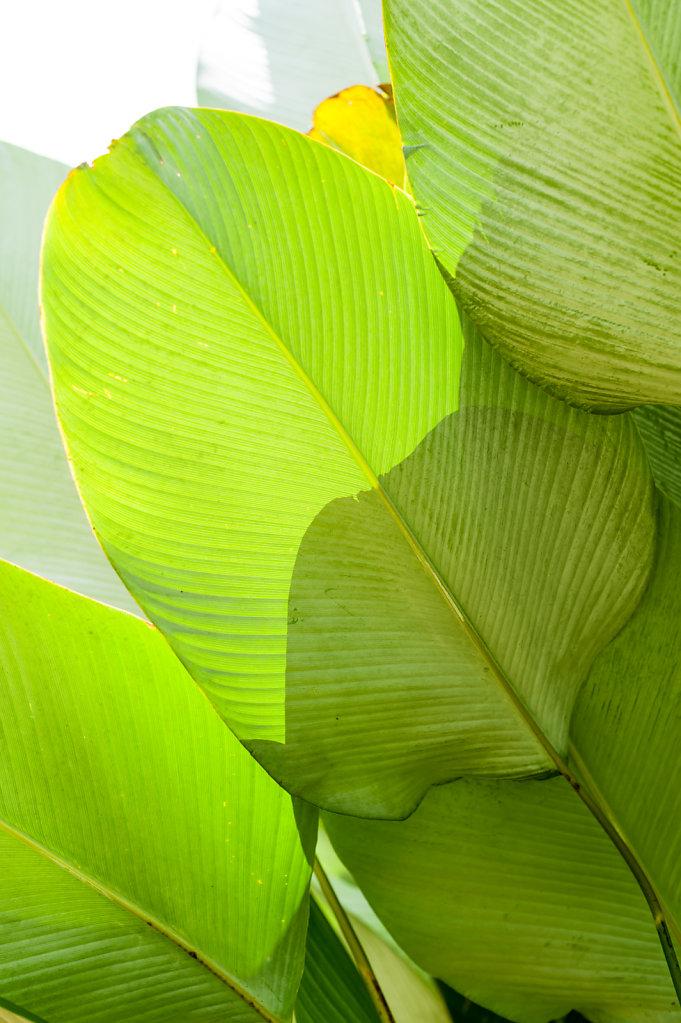 Palm (Bali - Indonesia)