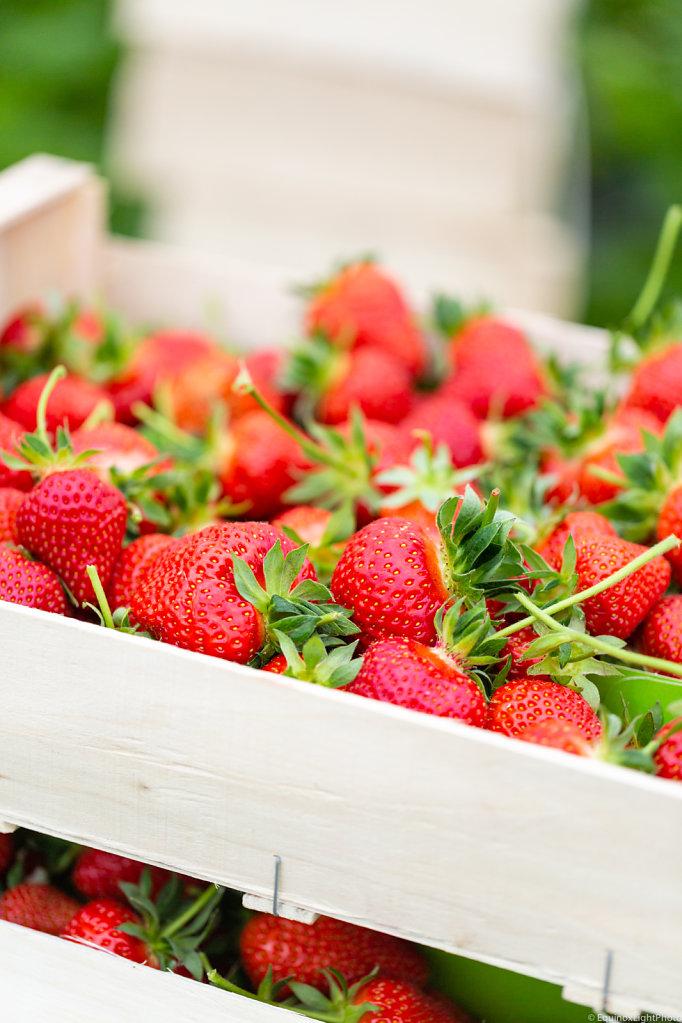 Strawberries / Legumes à la Ferme Farm / Belgium